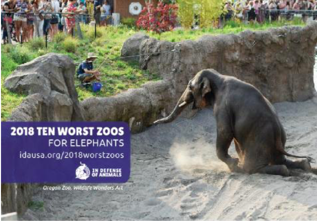 In Defense of Animals' 2018 Ten Worst Zoos for Elephants